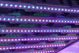 New Horticulture Light Modules Developed at LESA Accelerate Indoor Plant-Growth Research